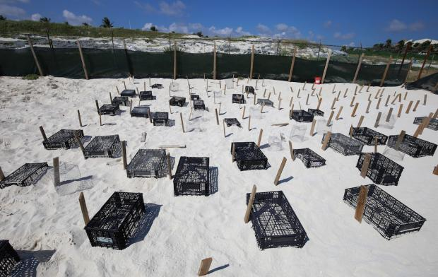 Aprueban construcción de hotel de lujo en Cancún, junto a nido de tortugas