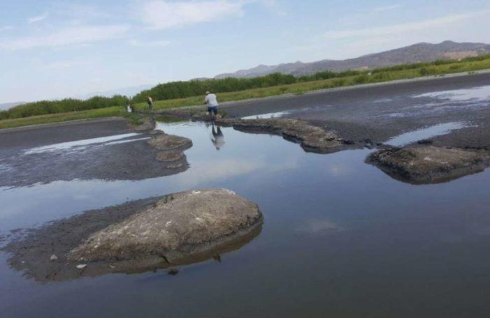 En Nayarit, denuncian devastación de reserva por construcción de granjas de camarón