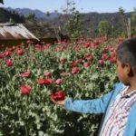En México, niños y jóvenes indígenas son obligados a unirse al narco: ONU