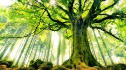 ¿Cómo se descubrió que los árboles se comunican entre sí y con otros?