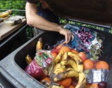 Al año, mexicanos tiran a la basura 20.4 millones de toneladas de alimentos: estudio