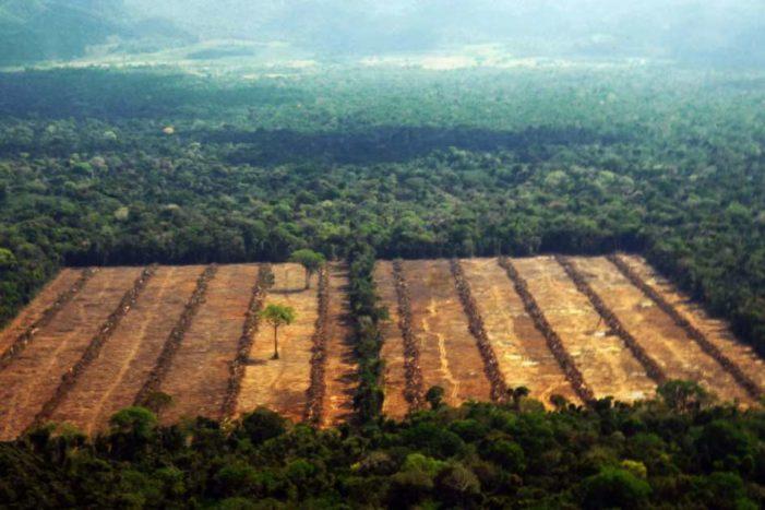 En 30 años con gobiernos del PRI y PAN, México perdió más del 25% de selvas y bosques