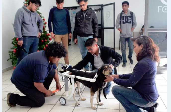 Estudiantes de la BUAP fabrican sillas de ruedas para perros discapacitados