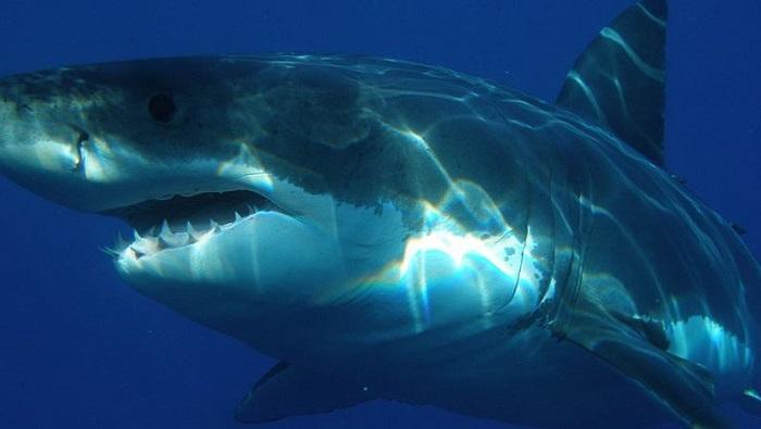 Cazador (casi) cazado; pescador estuvo a punto de ser devorado por un tiburón blanco (VIDEO)