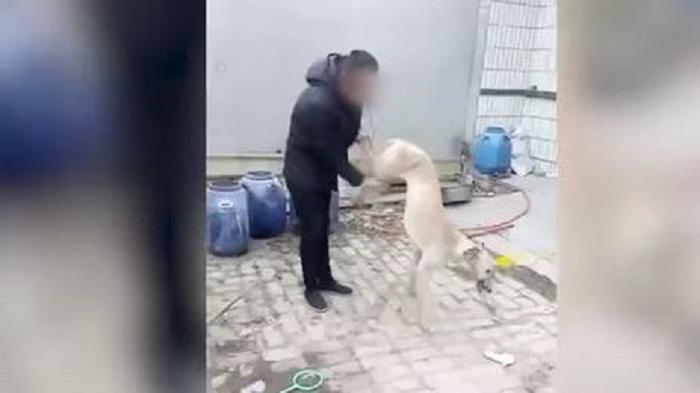 Hombre mata a su perro por perder carrera (VIDEO- FUERTES IMÁGENES)