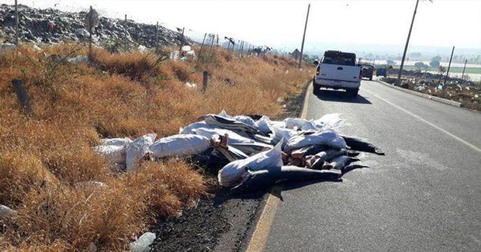 Abandonan 298 tiburones al pie de una carretera de Michoacán