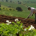 Campesinos del Mezquital pierden 58 mil hectáreas de cultivo por falta de aguas negras