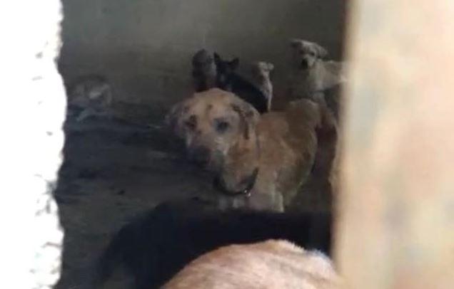 Al menos 30 perros damnificados del 19-S fueron maltratados en albergue (VIDEO)