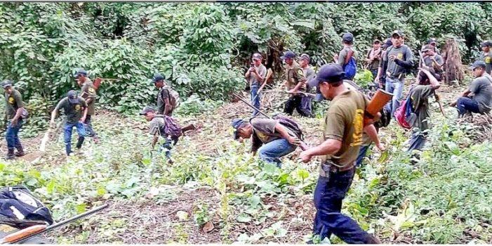 Guerrero, policía comunitaria destruye droga y detiene dos de sus comandantes