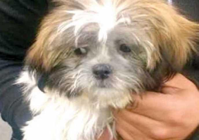 Tres sujetos son detenidos en GAM por robar perro de 30 mil pesos