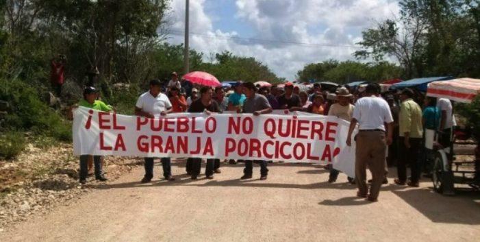 Homún,Yucatán: Peligran cenotes por permiso a mega porcicultora