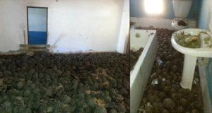 tortuguitas peligro de extinción casa en Madagascar