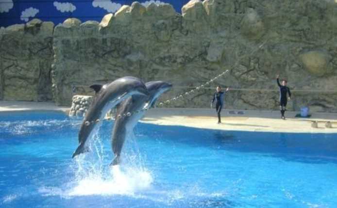 Prohíben uso de delfines en espectáculos