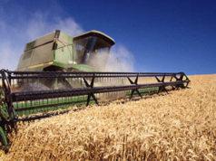México ha ido dejando de importar trigo de EU, ahora lo obtiene de Rusia