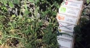 Puebla Hallan en baldío miles de boletas marcadas a favor de Barbosa