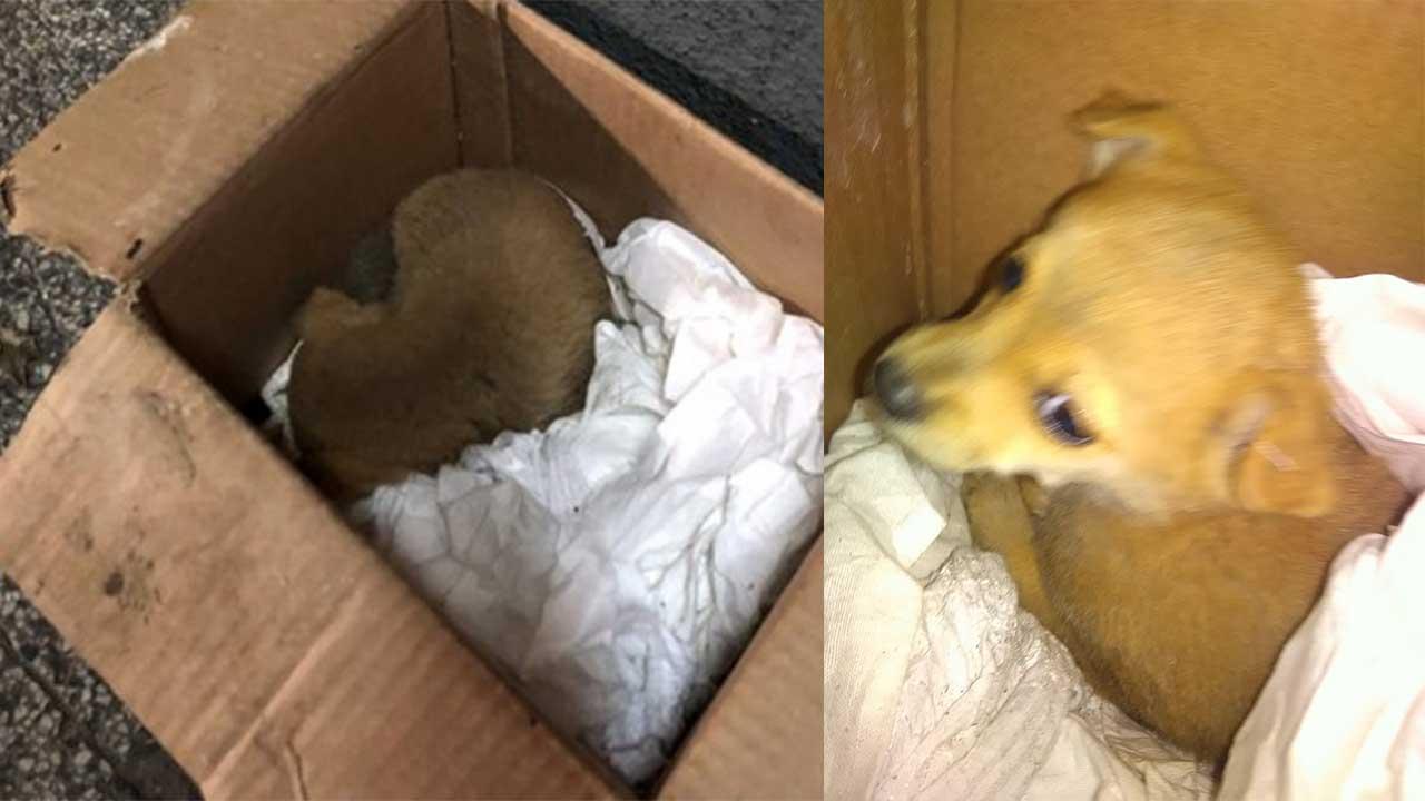 Rescataron a un perro del interior de un camión de basura