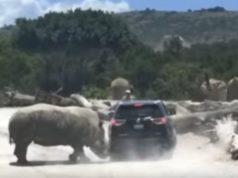 Rinoceronte arremete contra camioneta de familia en Puebla
