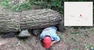 Talador clandestino muere aplastado por árbol de 300 kilos que él tiró