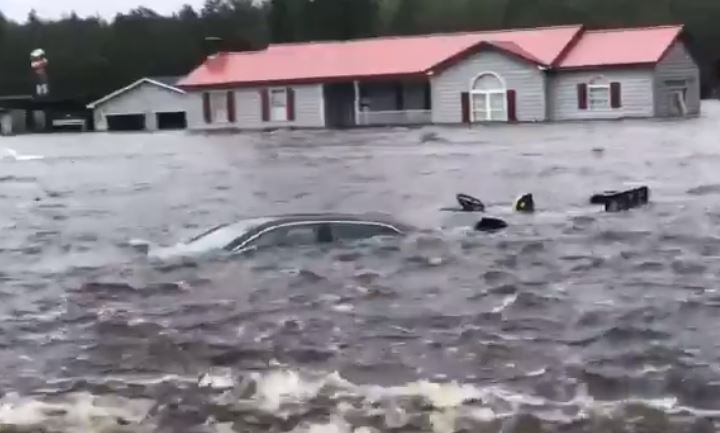 Salvó a seis perros de ahogarse por el huracán Florence