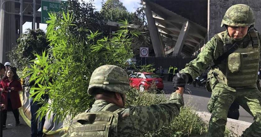 Se reafirma inconstitucionalidad de la prohibición de la marihuana; abre la puerta a legalización