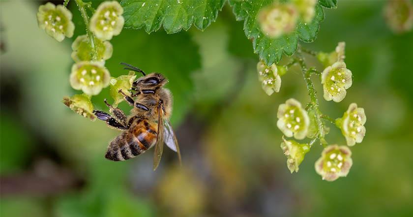 Francia, primer país en prohibir los cinco pesticidas que matan abejas