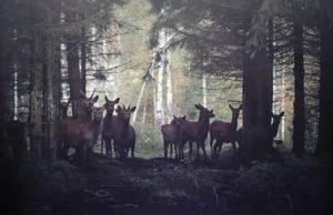 Buscan cura para la enfermedad del ciervo zombie antes de que llegue a humanos