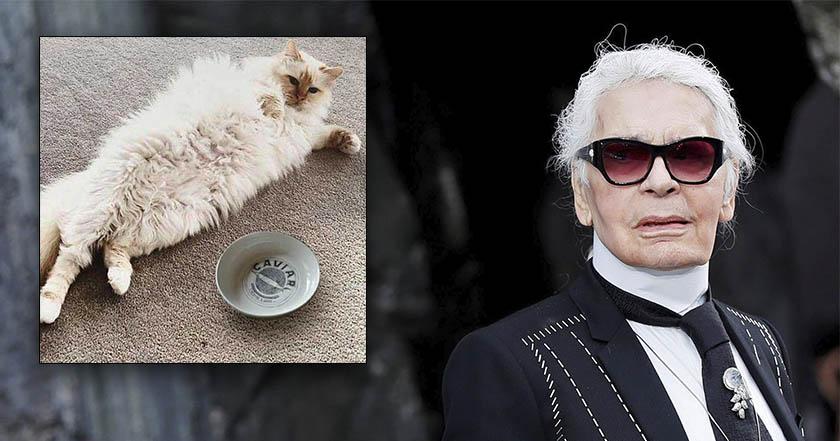 Muere Karl Lagerfeld, modisto de Chanel; gata Choupette heredará fortuna