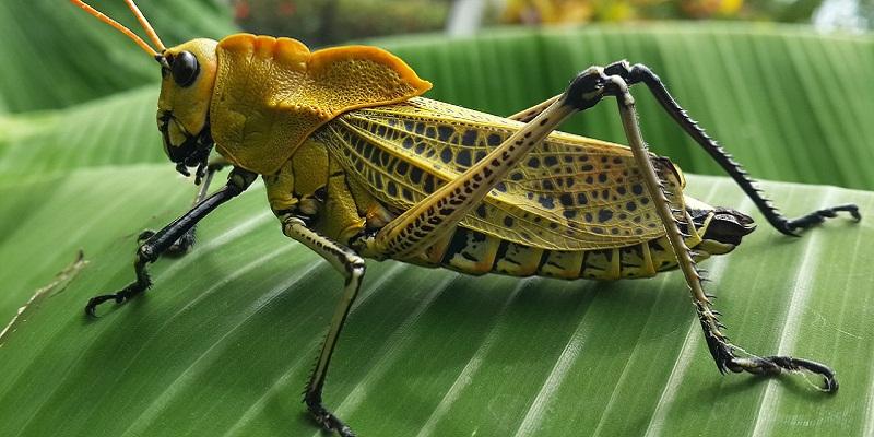 Resultado de imagen de insectos en peligro de extincion