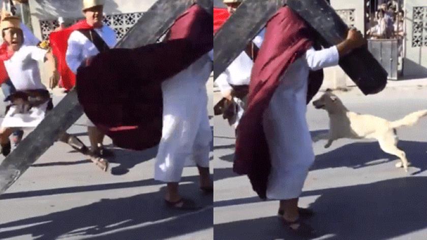 Perro callejero defiende a Jesús de los azotes en una recreación