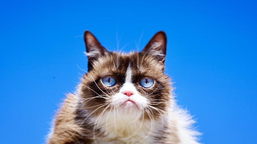 Muere la leyenda felina de internet — Grumpy Cat