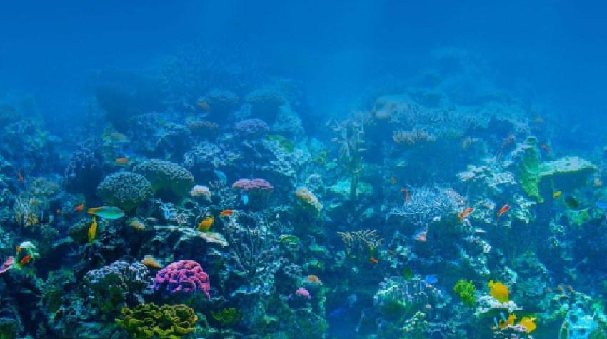 Día Mundial de los Océanos y las actividades de la ONU