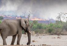 África también está ardiendo, Angola y Congo con 10 mil incendios