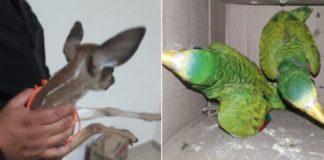 Detienen a hombre por traficar animales endémicos en Chiapas