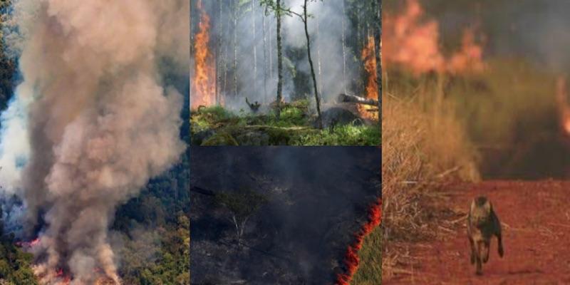 Brasil, 82% más incendios, claman contra destrucción del Amazonas