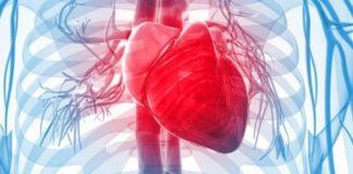 Ilustra corazón humano