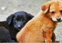 perro, dia mundial