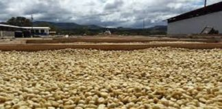 Convoca México a países de Mesoamérica a crear instancia que influya en el precio de café