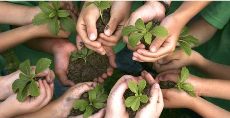 manos sembrando plantas