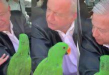 Regalan a AMLO un periquito en Coahuila (VIDEO)