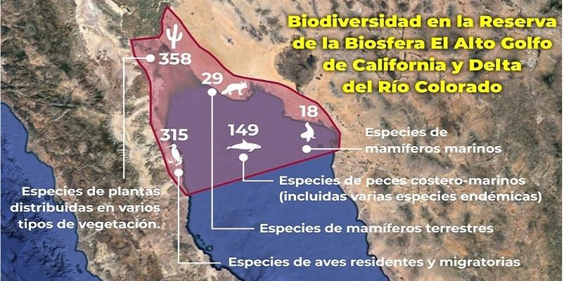 Alto Golfo de California