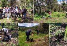 Jóvenes de Ixtapaluca realizan jornada de reforestación en Río Frío