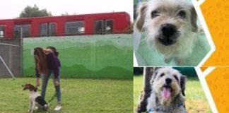 Conoce los requisitos para adoptar perros rescatados en el Metro
