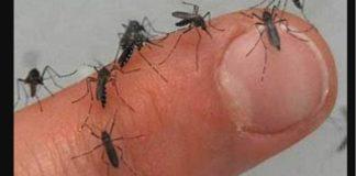 Dengue, también por transmisión sexual