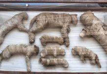 Hallan momias y estatuas de cachorros de león y de gatos en Egipto