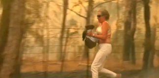 Por la gravedad de sus quemaduras, sacrifican a koala rescatado