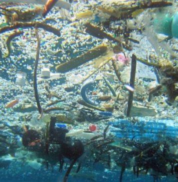 Contaminación de mares pondría en riesgo alimentación de millones