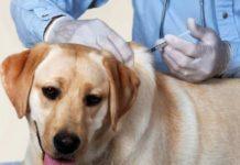 OMS certifica a México como el primer país libre de rabia canina