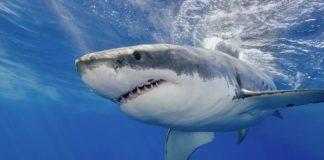 Colombia: Controversia por regulación en la venta de aletas de tiburones