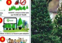 """""""No tales, mejor renta"""", promueven adopción de arboles de Navidad"""