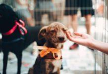 México libre de rabia a humanos por mascotas